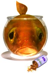 Stuck in your own fishbowl?